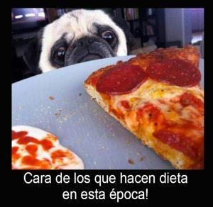 Cara triste del perrito que mira una pizza