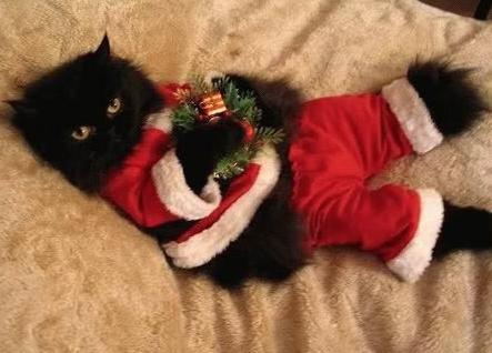 Gato negro con regalos de navidad