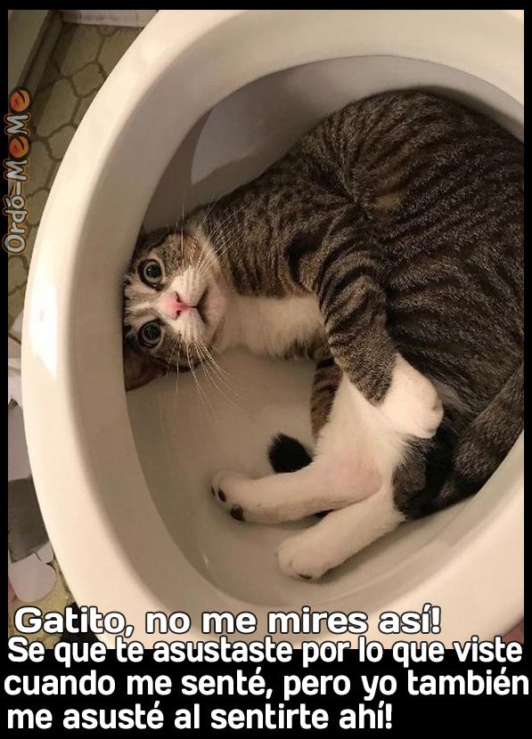 Meme Gatito no me mires asi