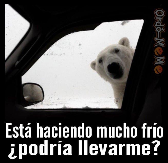 Oso polar me lleva