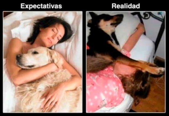 expectativa realidad mascotas