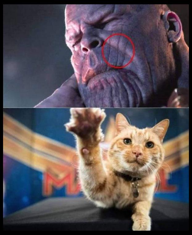 Meme gato araña a thanos