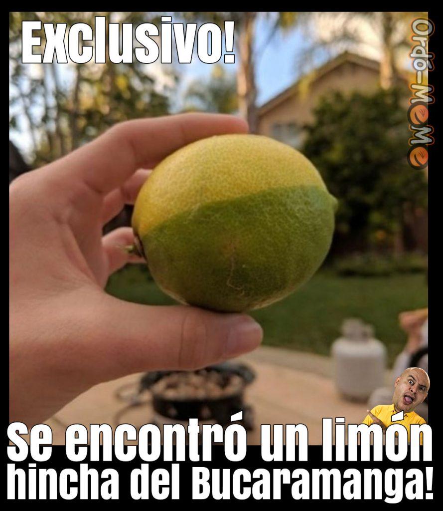 Limon hincha del Bucaramanga