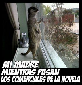 Meme madre uricata ventana