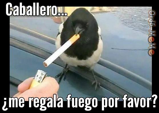 Meme fumadores