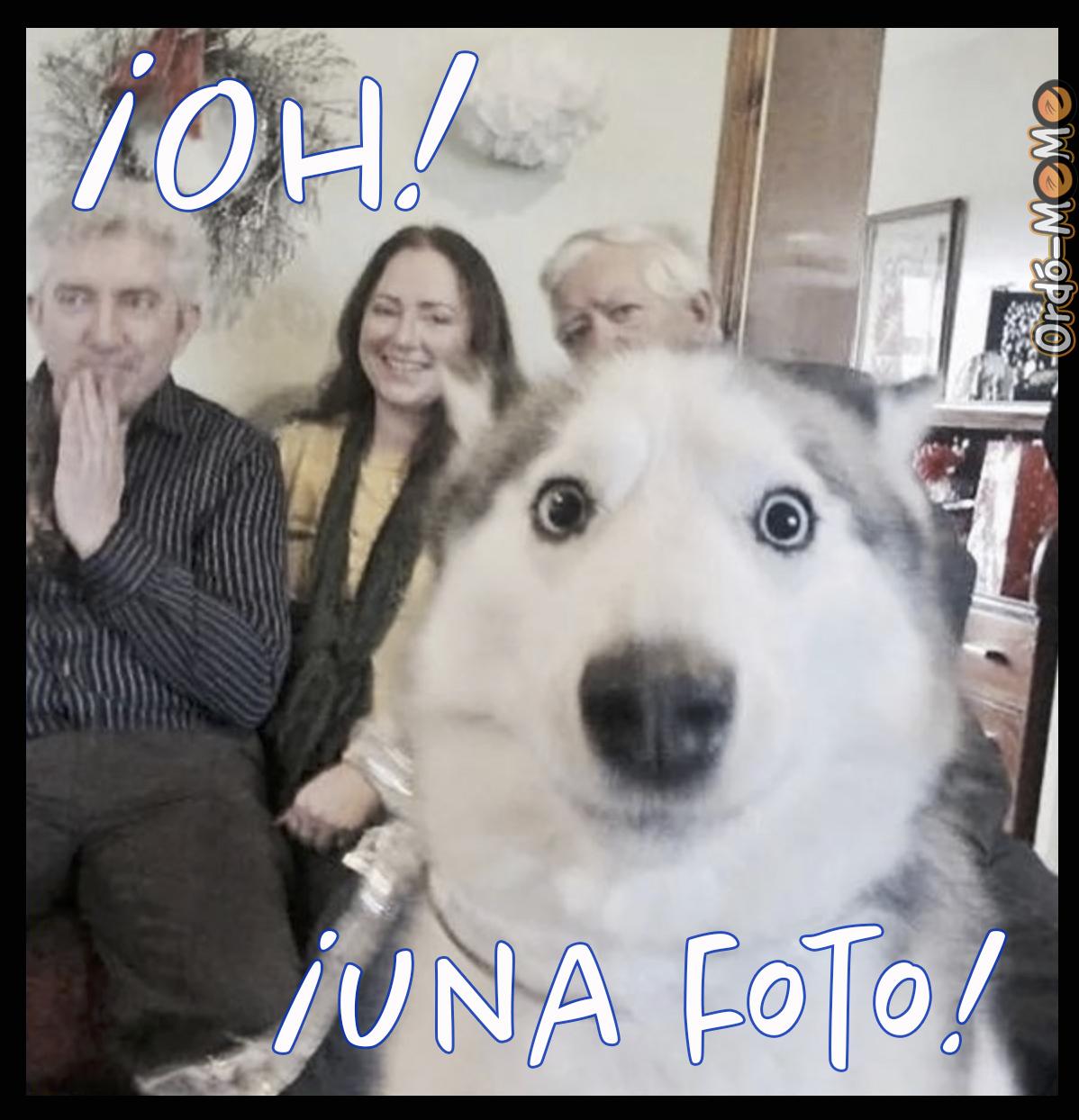perro sorprendido en primer plano cerrado al momento de tomar una fotografía