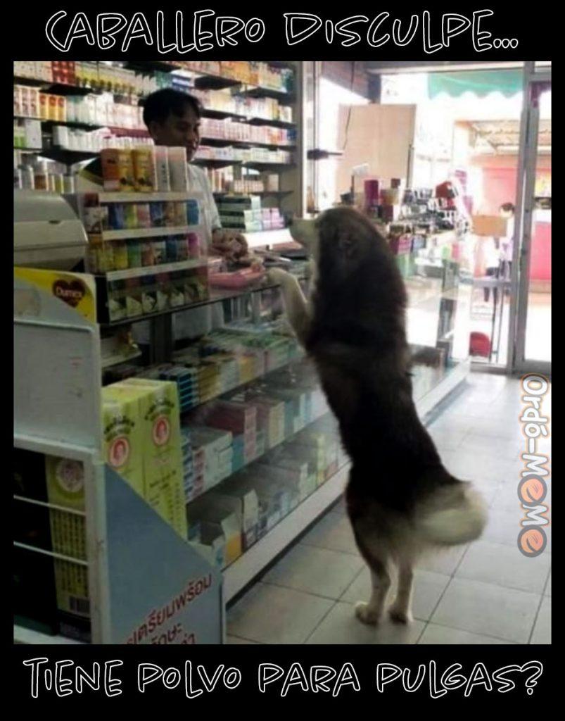 Perro en la farmacia
