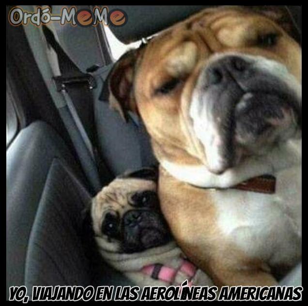 dos perros uno mucho mas grande que otro apretados en el asiento contra el cinturon de seguridad