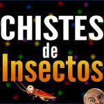 Chistes de insectos