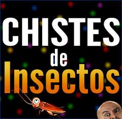 Imagen destacad chistes de insectos