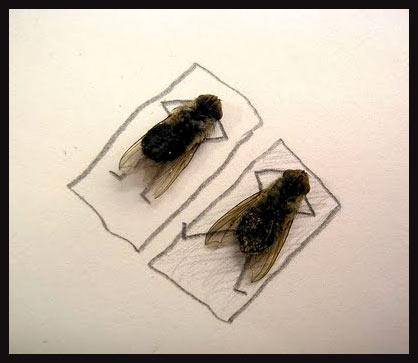 Meme moscas descansando
