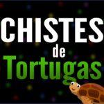 Chistes de tortugas