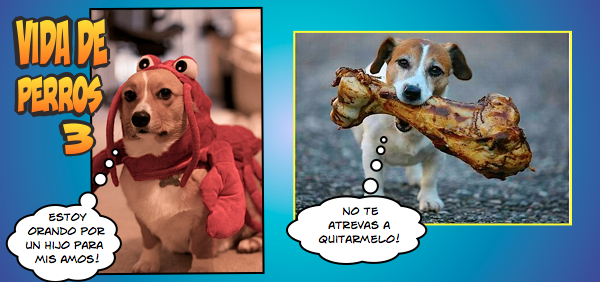 Meme vida de perros