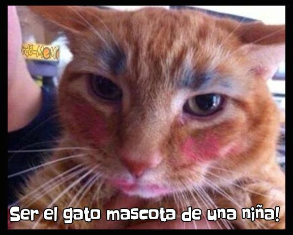 Meme gato mascota niña