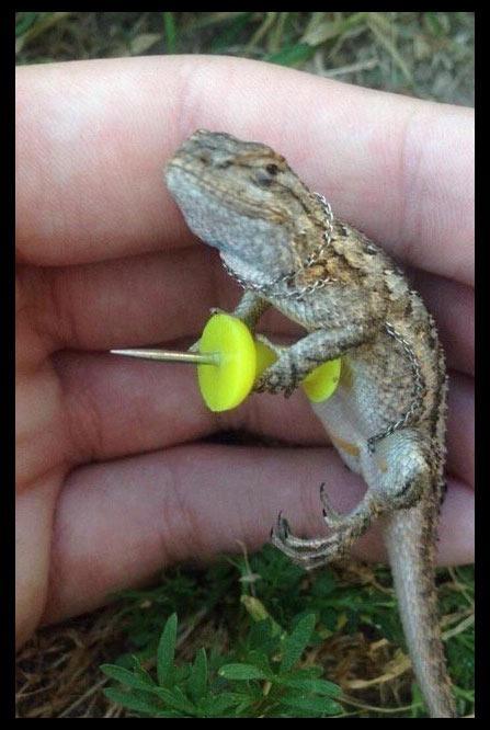 Meme reptil se defiende
