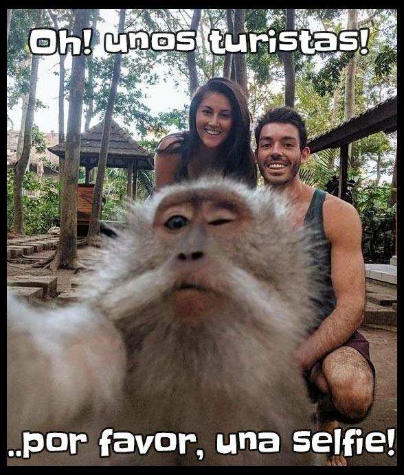 Un mono ve a unos turistas y decide sacarse una selfie