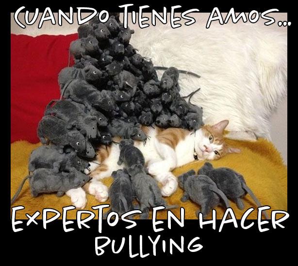 Meme del gato al que los amos le hacen bullyng