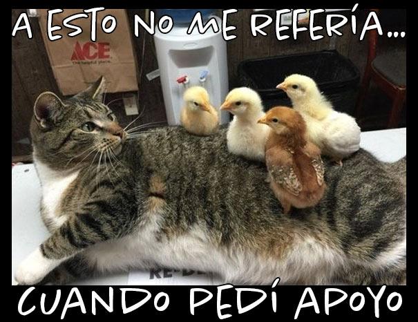 Meme de gato que busca apoyo