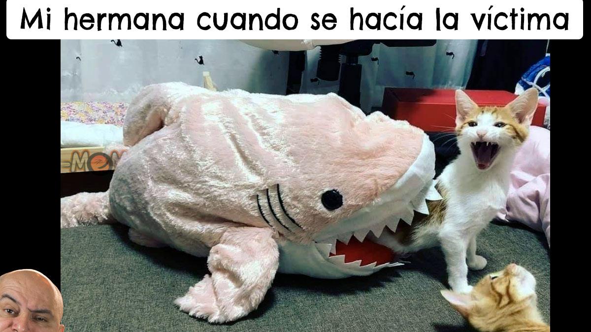 Un peluche de tiburón parece morder a un gatito que se queja.